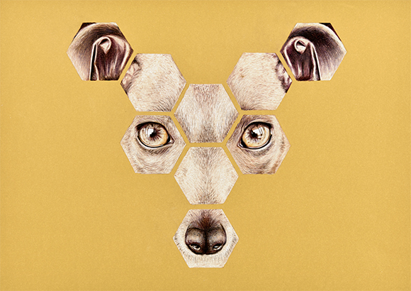 Animales-6b